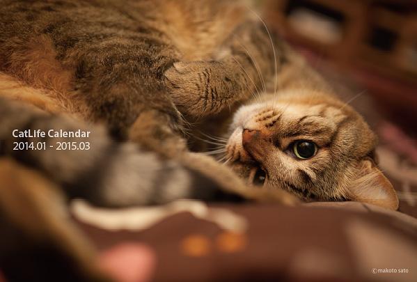 2014年版CatLifeカレンダー表紙