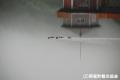 佳作 暑寒ダムが育む 2011雨竜町観光フォトコンテスト