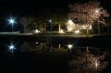 2014雨竜町観光フォトコンテスト 佳作 夜桜 宮川 彩 (北海道砂川市)