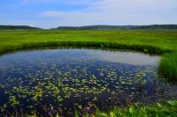 2015雨竜町観光フォトコンテスト 佳作 紺碧の雨竜沼湿原 及川翔平 (北海道札幌市)