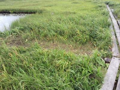 170802-3今日の雨竜沼