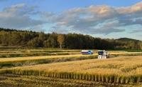 優秀賞「収穫の秋」