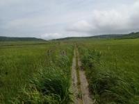 190730湿原風景