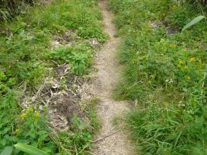200730南暑寒岳登山道の熊の掘り返し
