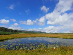 200902湿原風景2