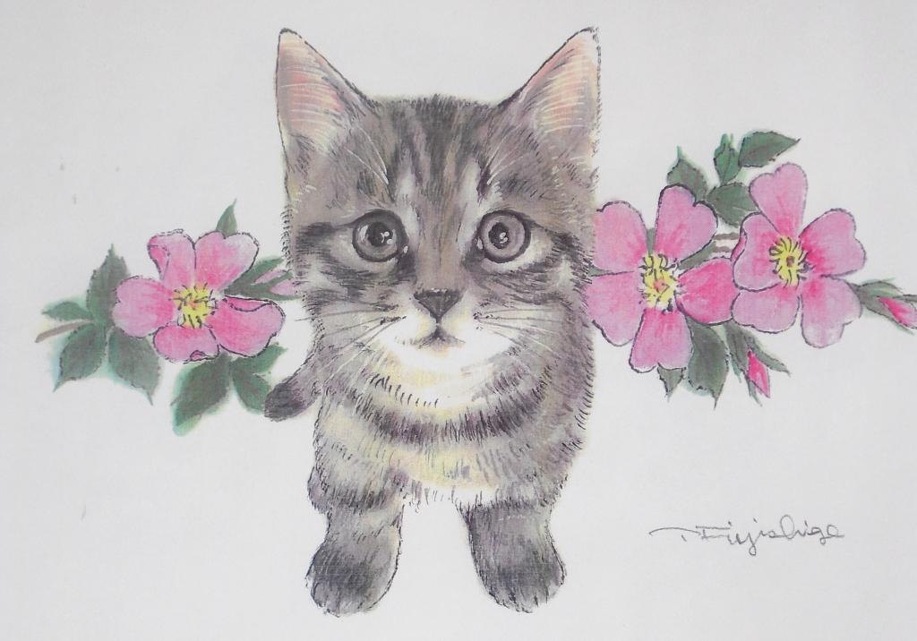 3野バラと猫