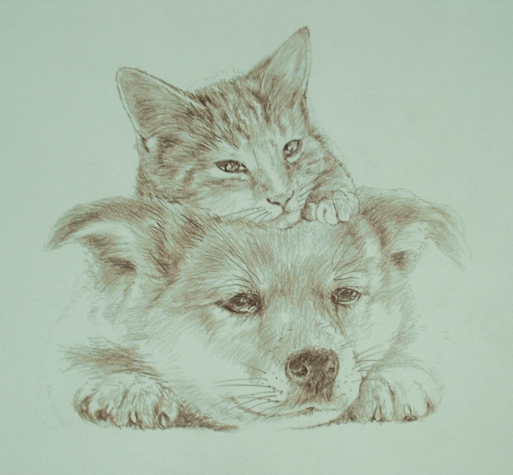 3猫犬色鉛筆