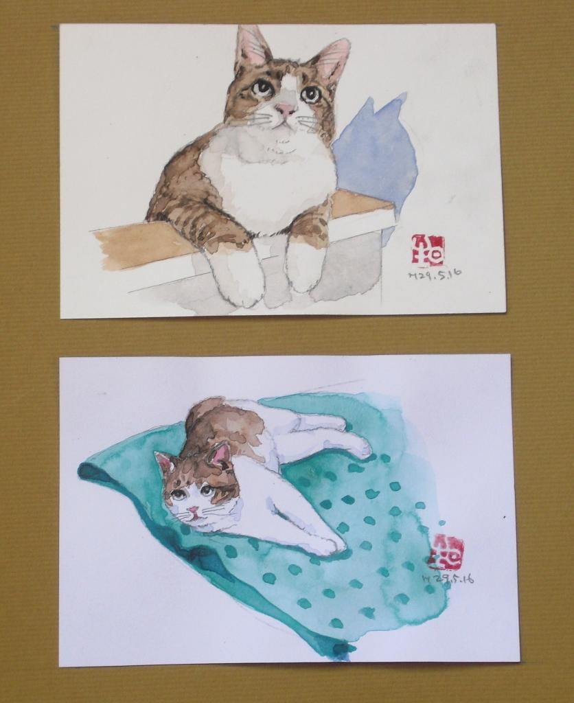 4ハガキ絵猫.JPG