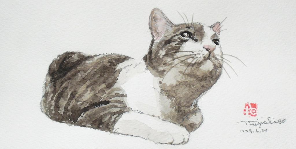 3猫絵手紙.JPG