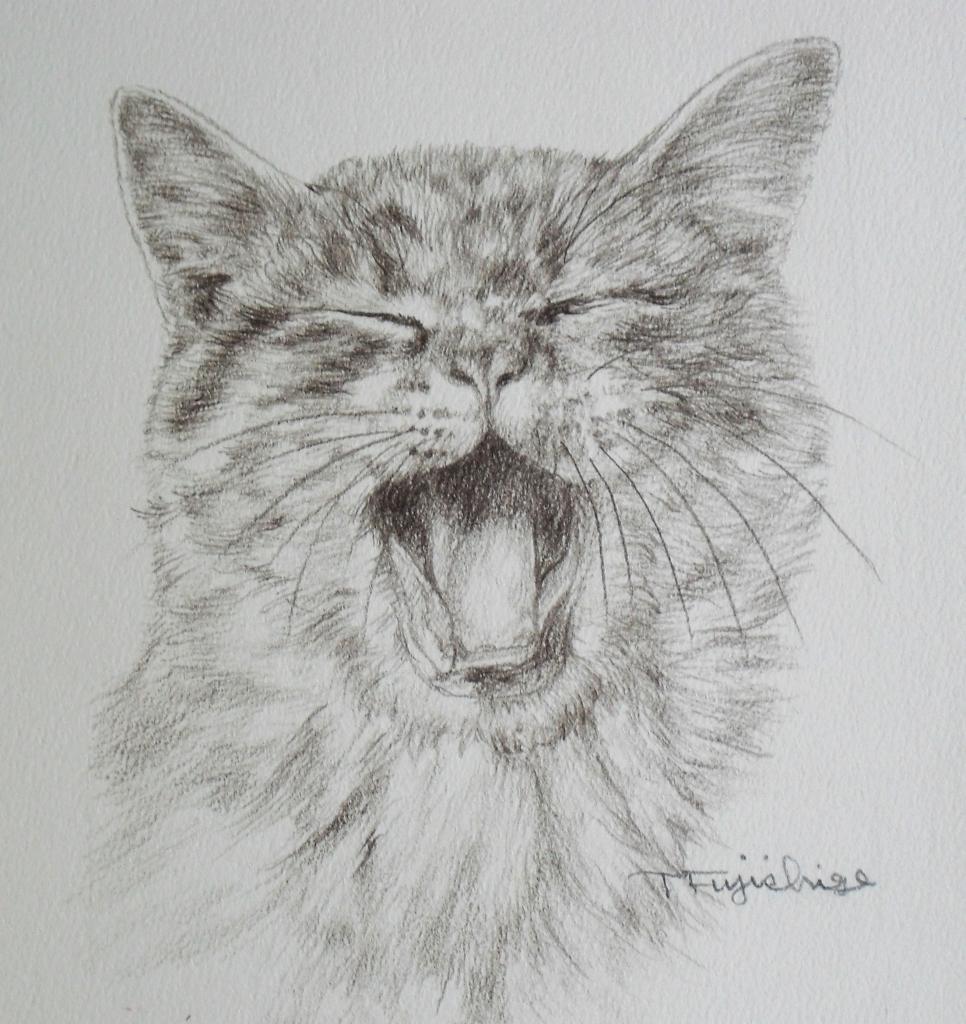 4の猫.JPG