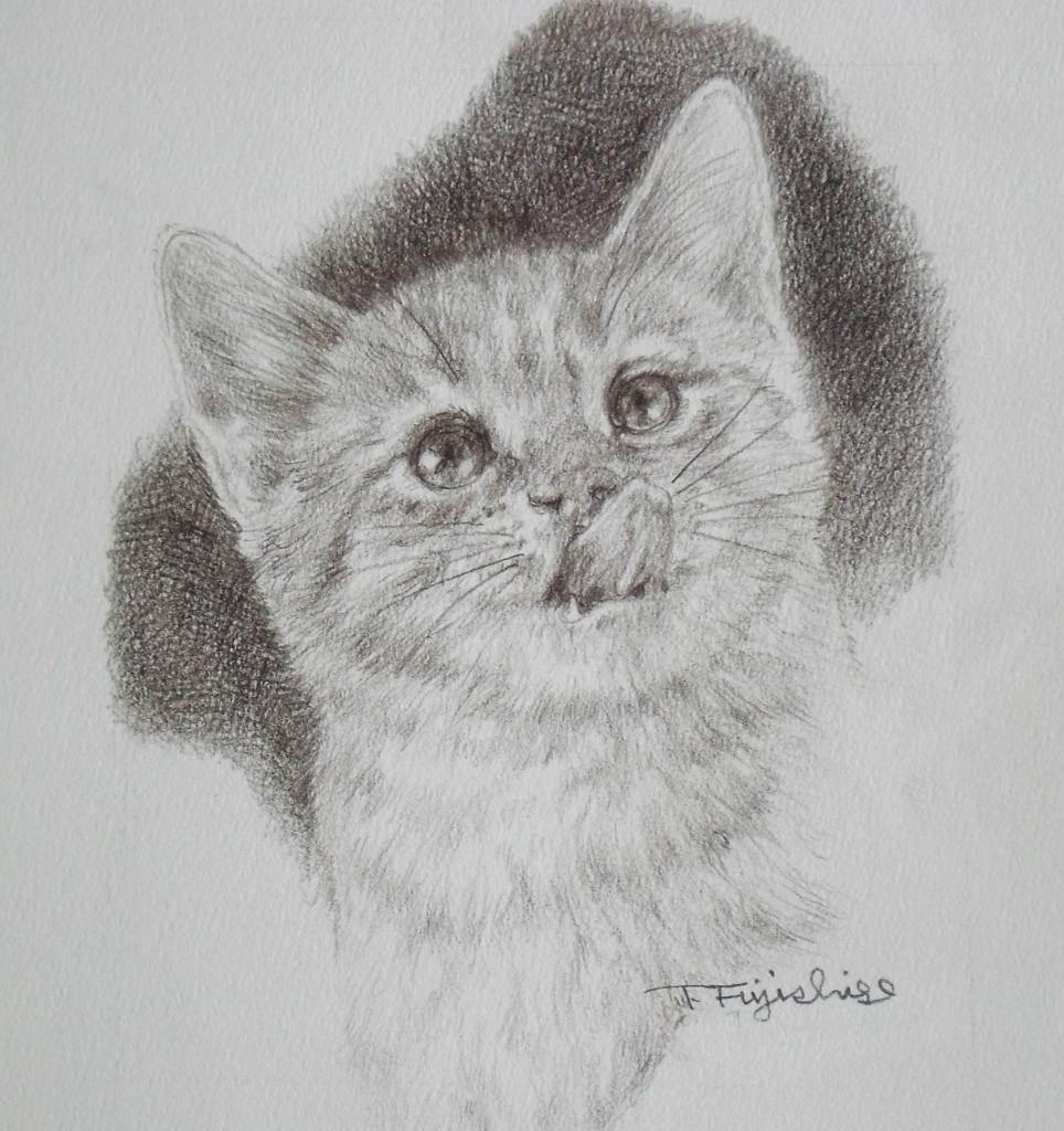 6の猫.JPG