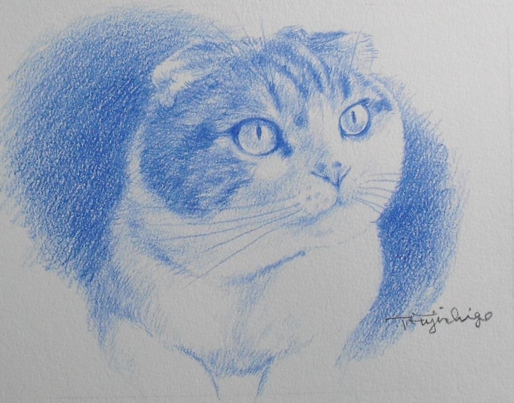 猫N02.JPG