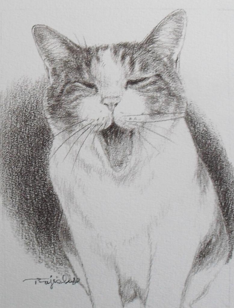 猫N03.JPG