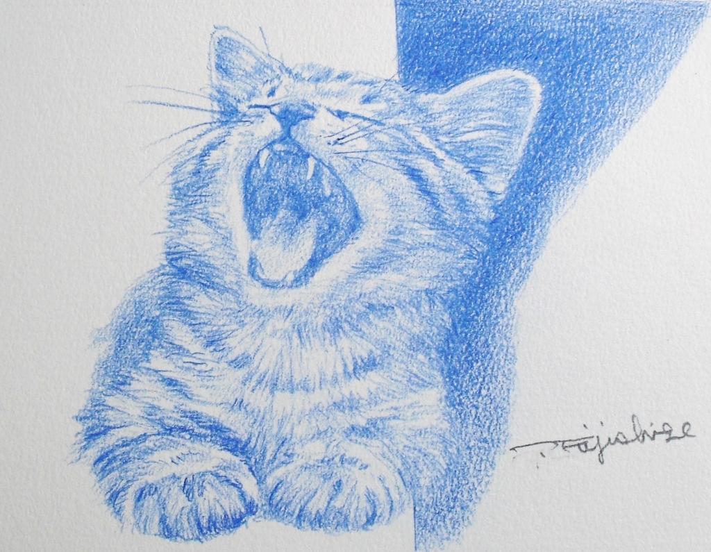 猫N05.JPG