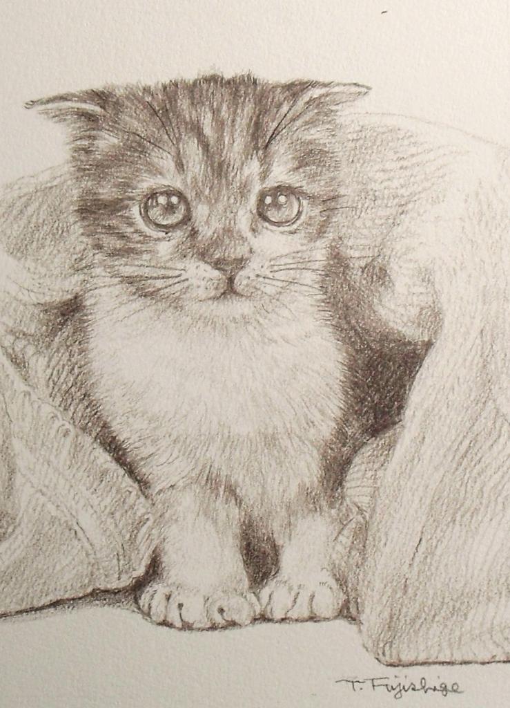 猫N06.JPG