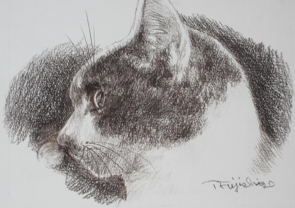 猫絵no8.jpg