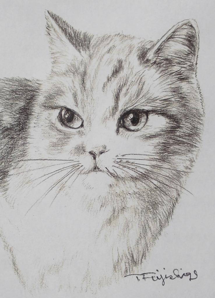 猫左アップ13.jpg