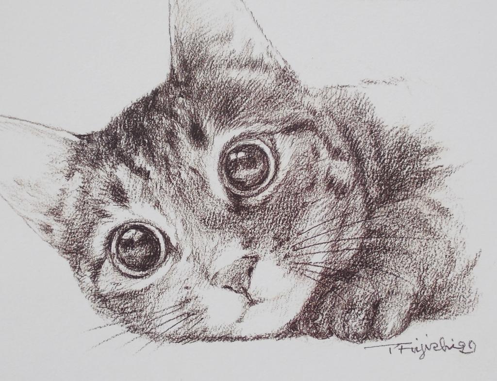 猫ギョロメ14.jpg