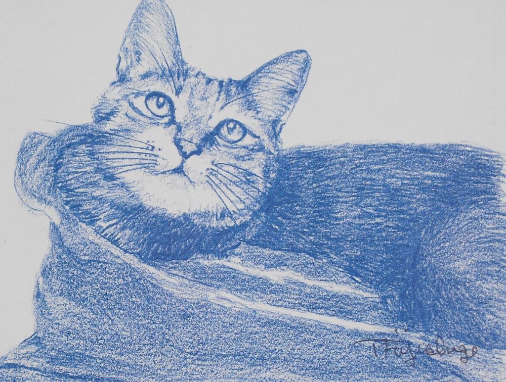 猫と布15.jpg