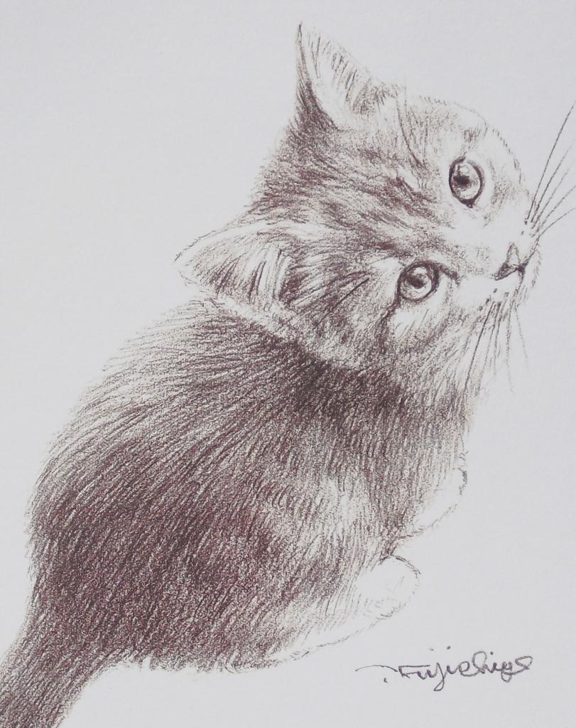 猫うえから16.jpg