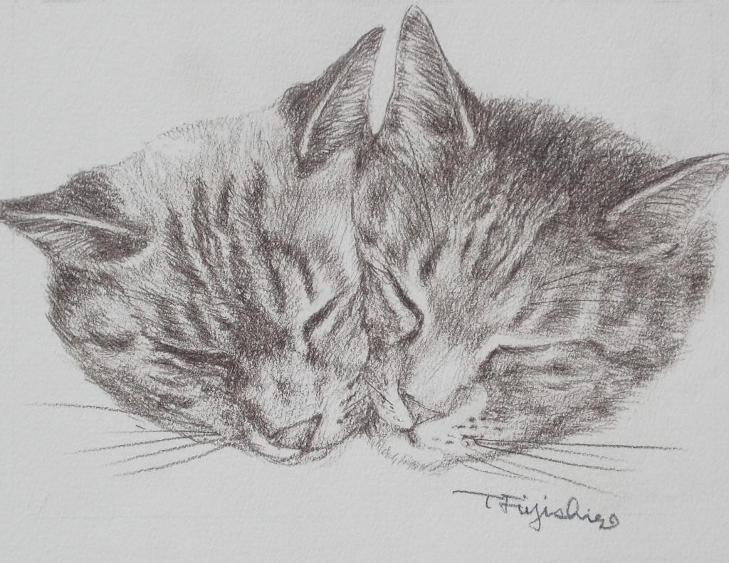 猫2匹17.jpg