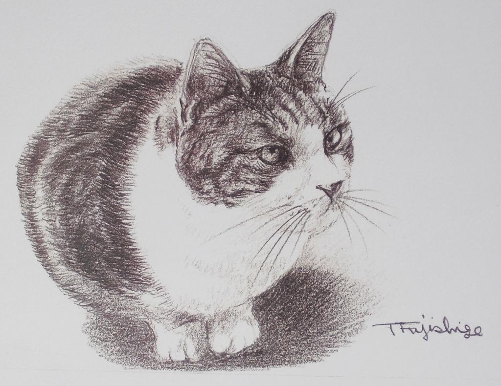 猫にらむ18.jpg