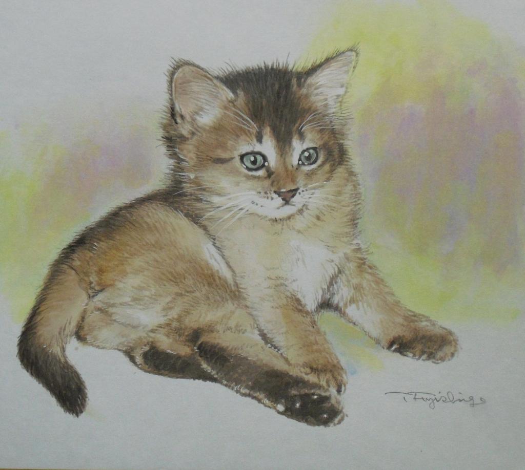 CIMG4408猫.jpg