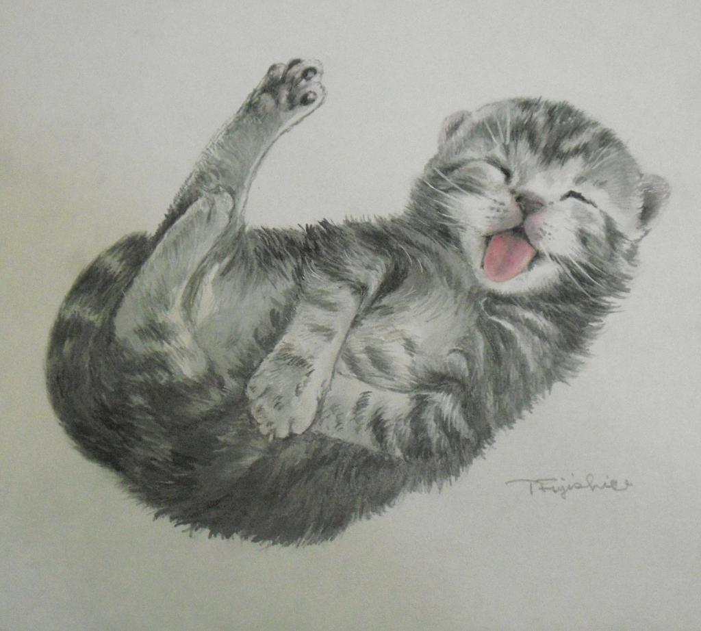 CIMG4414猫.jpg