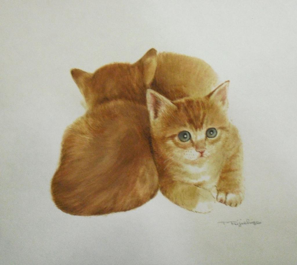 CIMG4433猫6.jpg