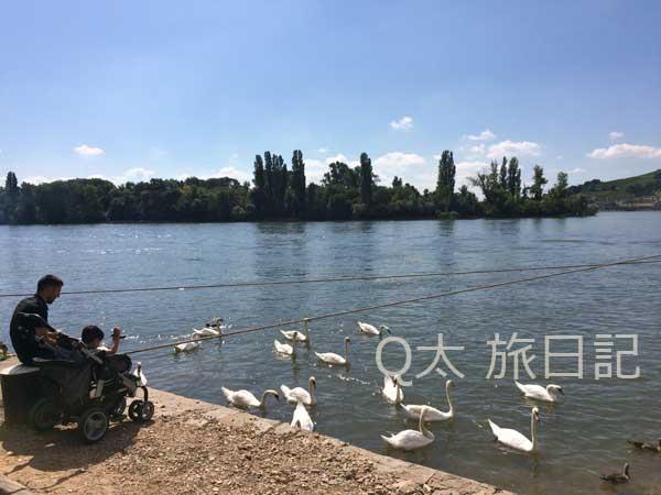 ライン川サイクリング
