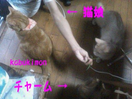 猫娘 450 2.JPG