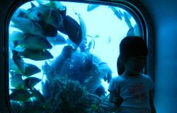 海底展望台