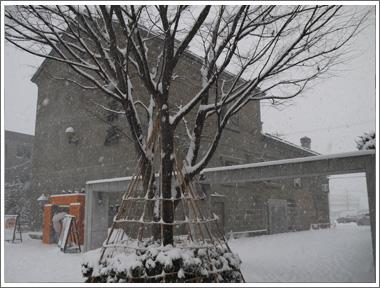 小樽は大雪