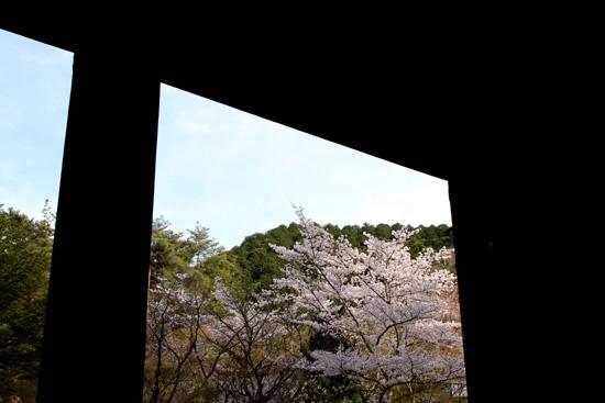 南禅寺山門からみえるさくら☆