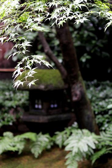 雨の濡れる木々の美しさ☆