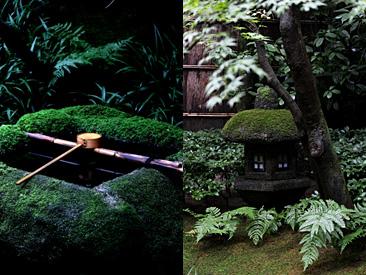 たっぷりと水を含んだお庭