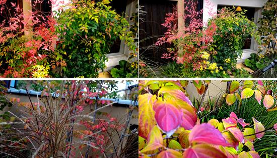 遊形サロン玄関先も秋色に変身