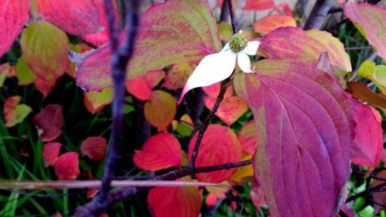 お花まで赤くなっています(^_-)-☆