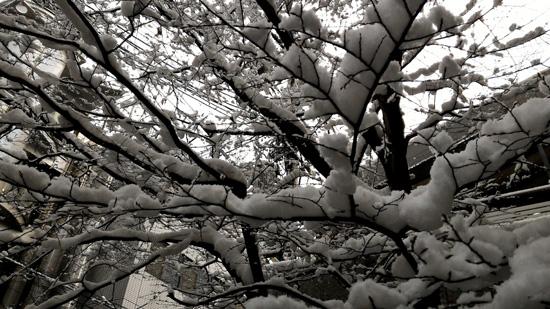しなやかな枝も・・いつの間にやら満開に(*^。^*)