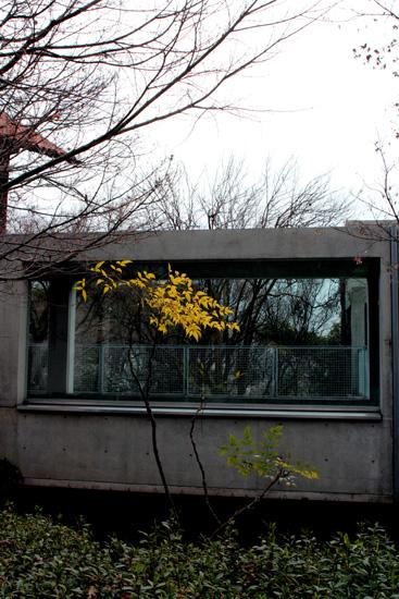 山荘とモダンな建物としなやかな樹と(^_-)-☆
