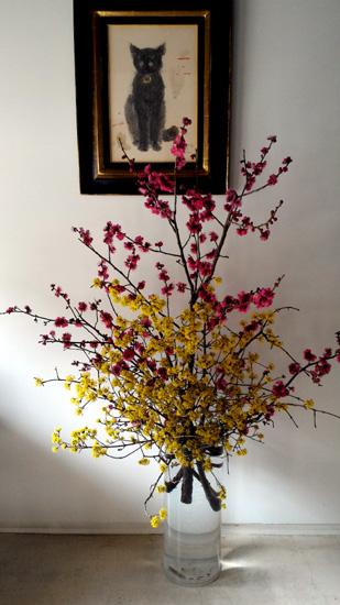 春のお花(サンシュウ・紅梅)