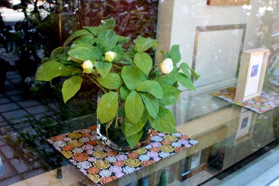 上品で魅力ある季節の花 山芍薬