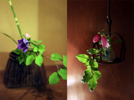 お部屋も廊下も季節のあ花が