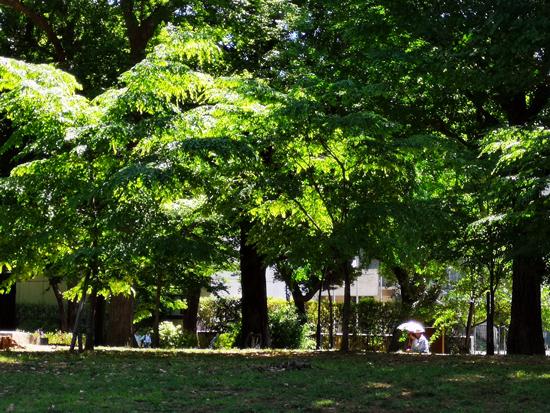 上野公園内の緑と光