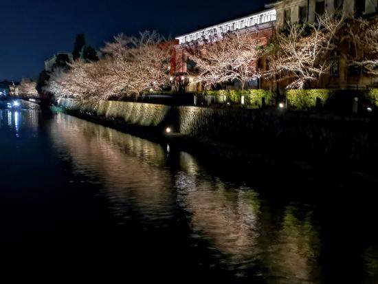 夜桜見物へ