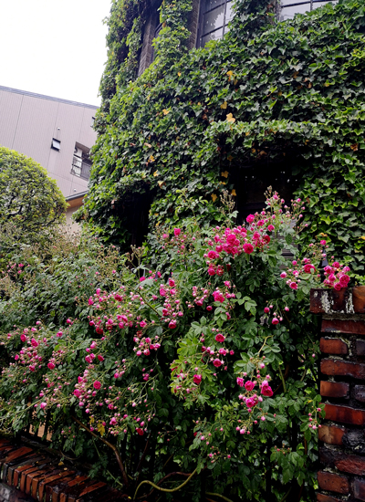 薔薇の美しい季節