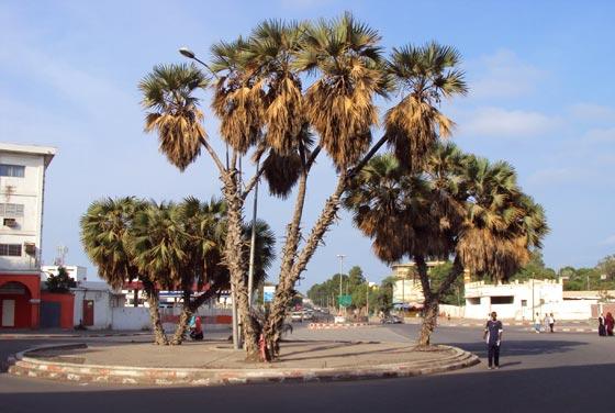 Djibouti Cuty Cenrer