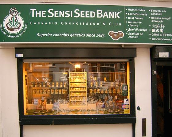 AMS sensi seed bank