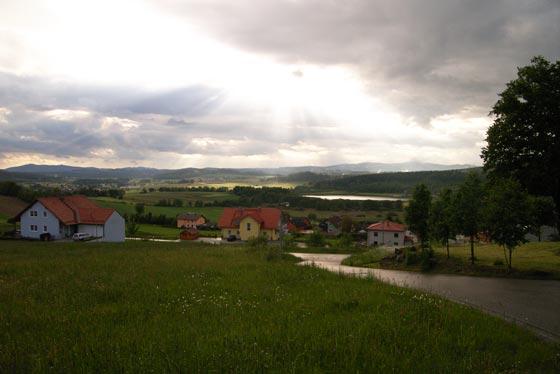 Wald Munchen