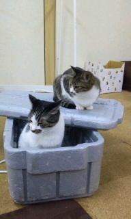 http://img-cdn.jg.jugem.jp/f09/2160420/20120923_2549662.jpg